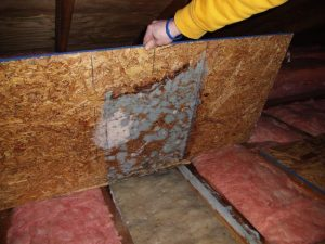 Sunrise Restorations technician performing mold remediation from attic insulation